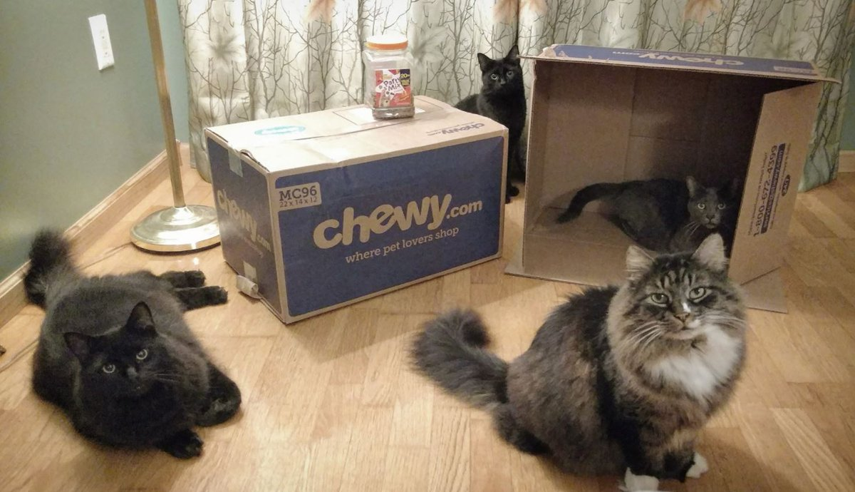 chewy chewy twitter