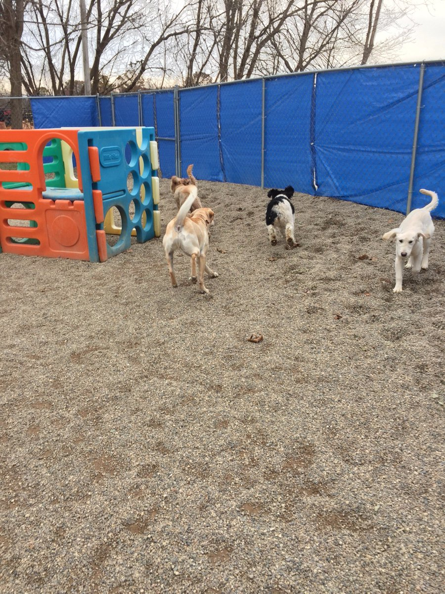 Breslin, Bella C. , Diesel and Carmine are having a blast together