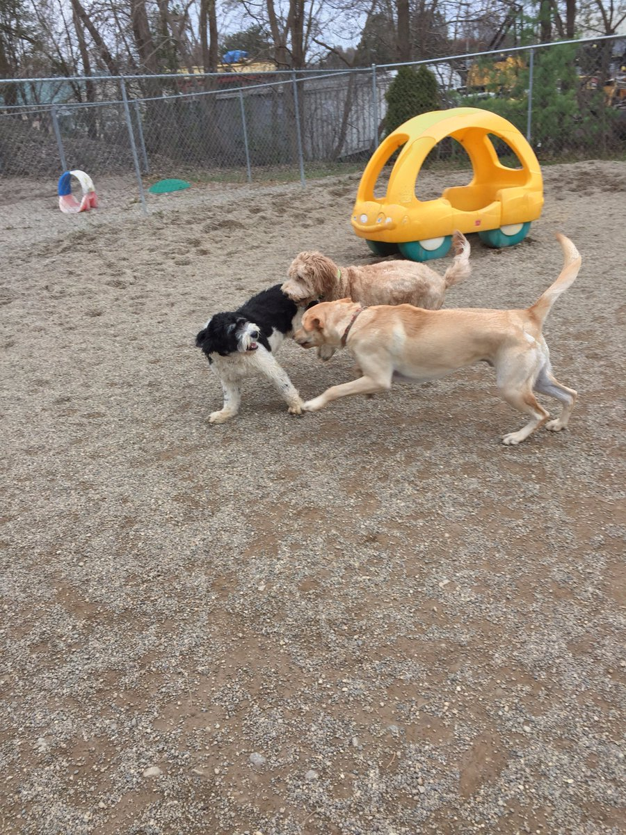 Bella C. gets Carmine and Diesel to chase her