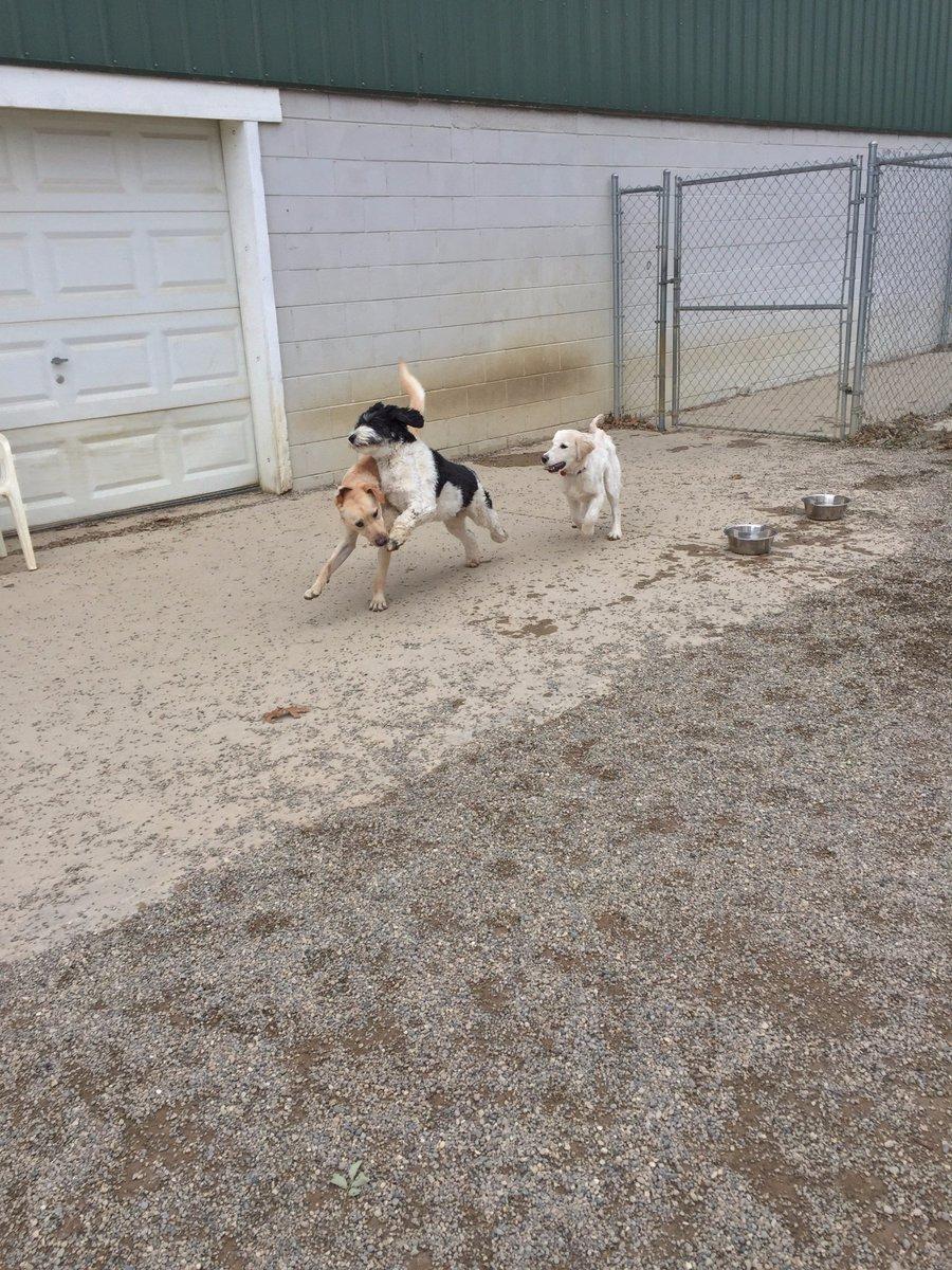 Diesel, Bella C. and Breslin love to run