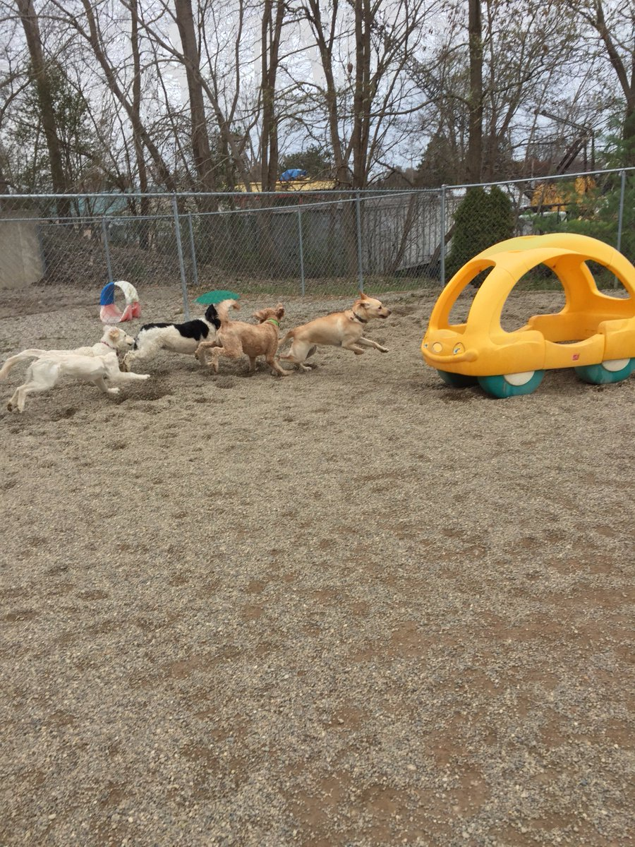 Diesel, Carmine, Bella C. and Breslin are off and running
