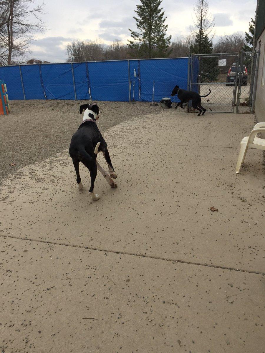 Zeus gets Loki to chase him