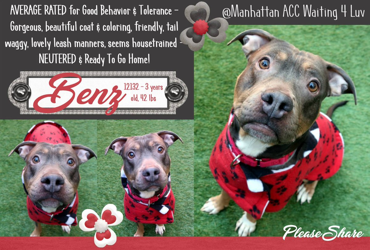BENZ STILL ALIVE!  http:// nycdogs.urgentpodr.org/benz-12132/  &nbsp;     #NYC KILL TARGET YOUNG BOY SOCIAL PLAYFUL AFFECTIONATE WELL BEHAVED SAVE ME! CAN BE RESERVE ON LINE ADOPTABLE #FOSTERING IS FREE MSG  https://www. facebook.com/mldsavingnycdo gs/ &nbsp; …  HELPDOGS@URGENTPODR.ORG #NYC ANIMAL CARE CENTER STARTS DAILY KILLS AFTER NOON <br>http://pic.twitter.com/JjRKwHpXPP