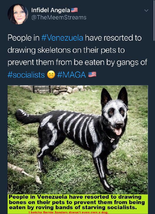 Pic 1: Totally absurd propaganda myth about people starving in #Venezuela, resorting to eating dogs  Pics 2-4: Pics I took few months ago in Venezuela of fat af dogs I saw everywhere I went, all over the country (esp in poor areas) <br>http://pic.twitter.com/gnoFvegZTb