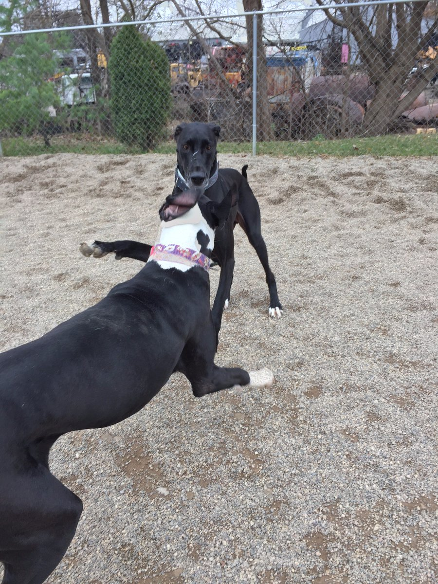 Loki and Zeus get ready to play