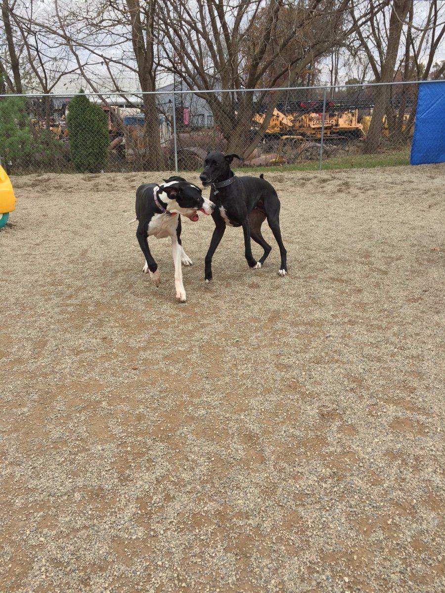Loki and Zeus race across the yard