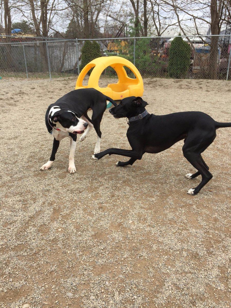Zeus and Loki do a little dance