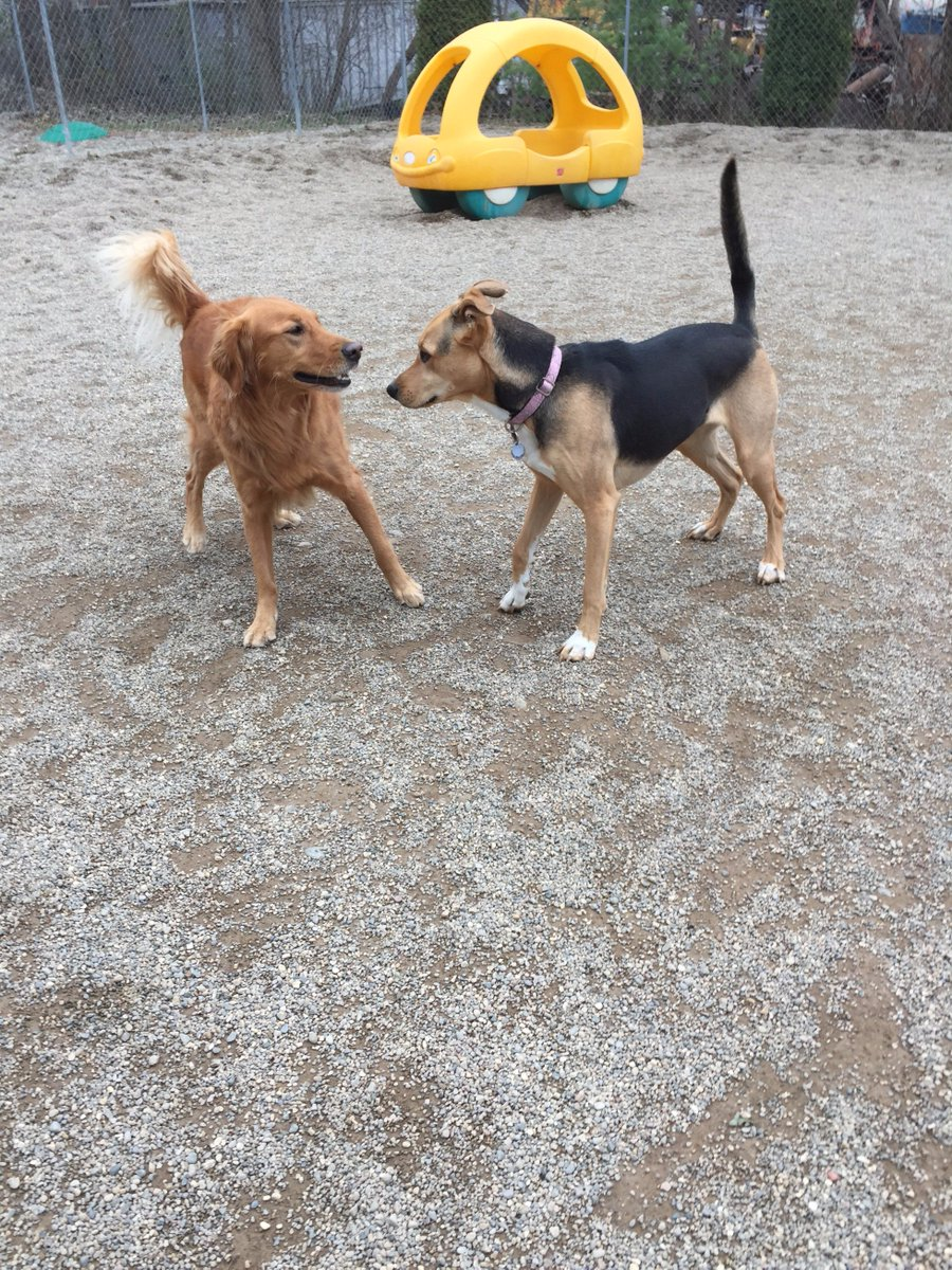 Maggie Mae and Chloe get ready to play