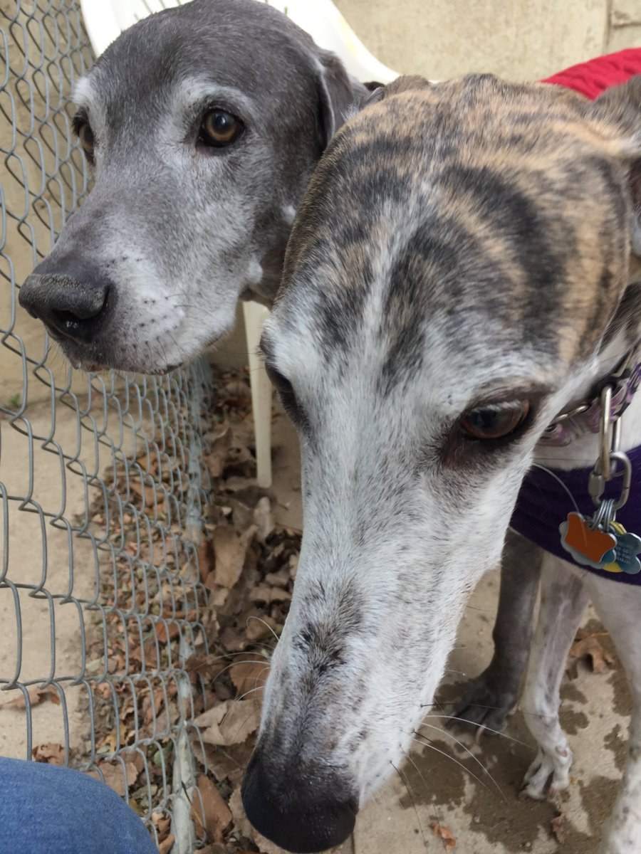 Lotti and Blue come in for a close up