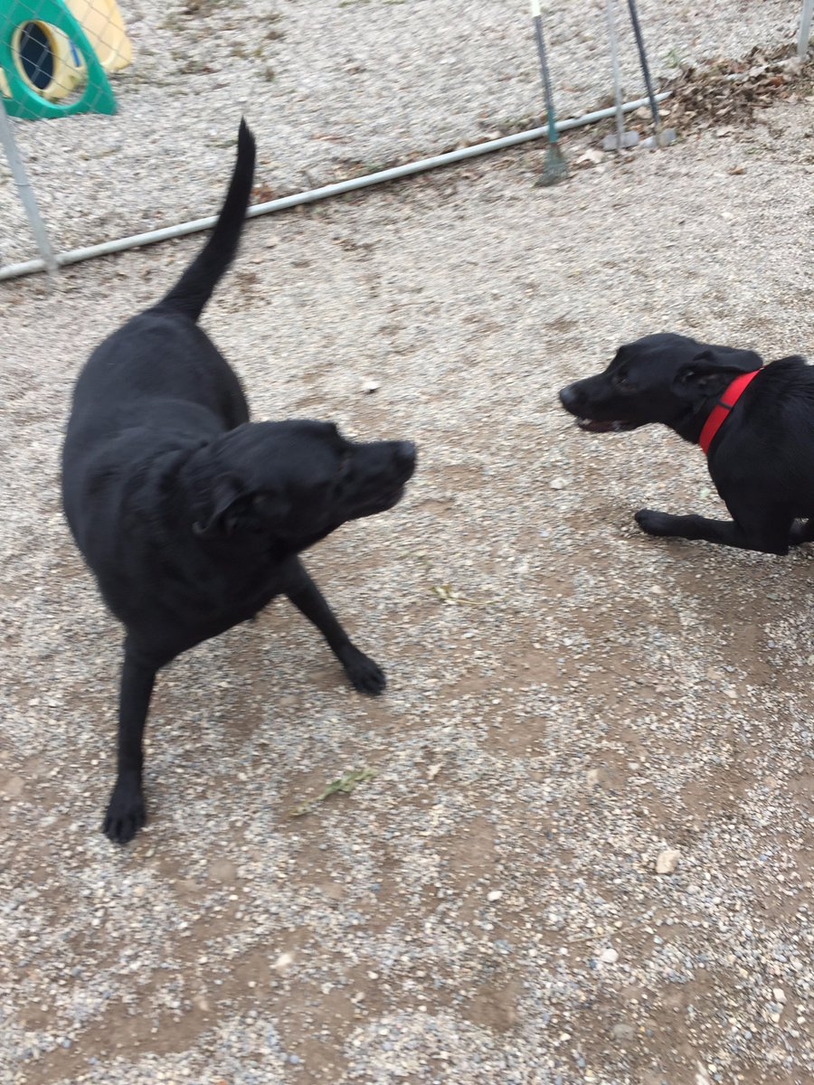 Buddy H. asks Maizy to play