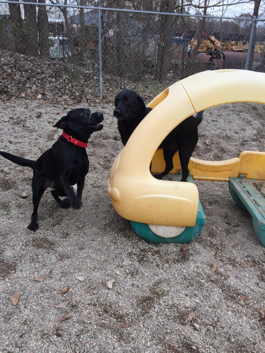 Buddy H. tries to get Maizy to chase him