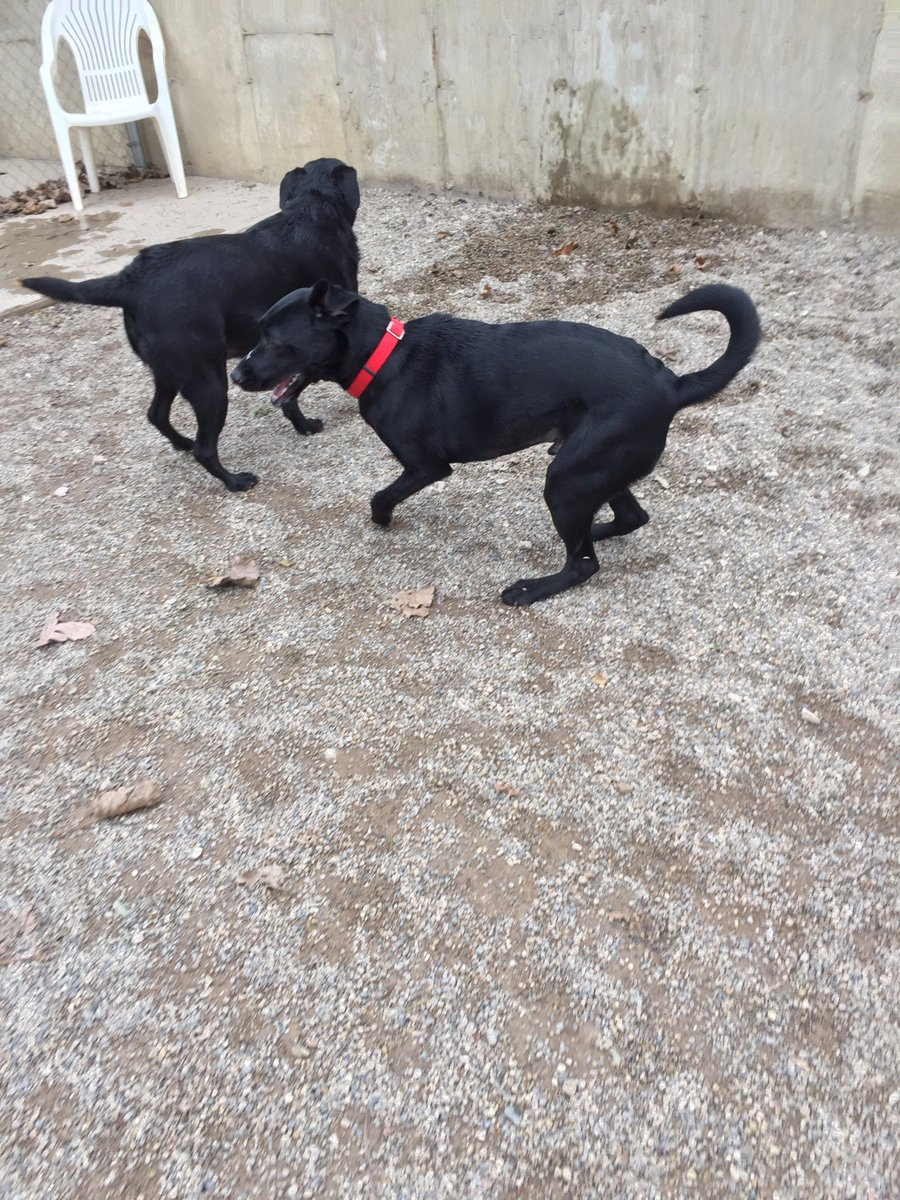 Maizy and Buddy H. practice their dance moves