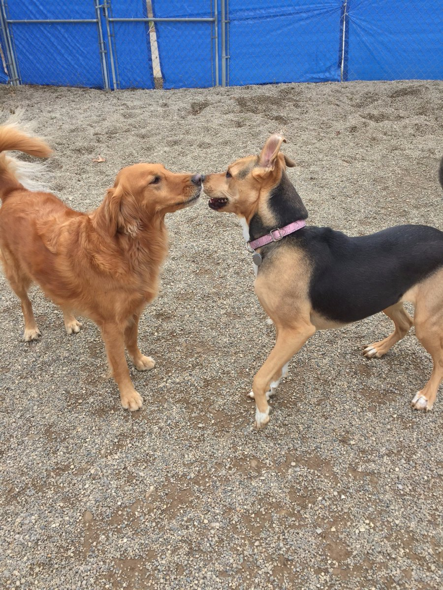 Chloe and Maggie Mae share and Eskimo kiss