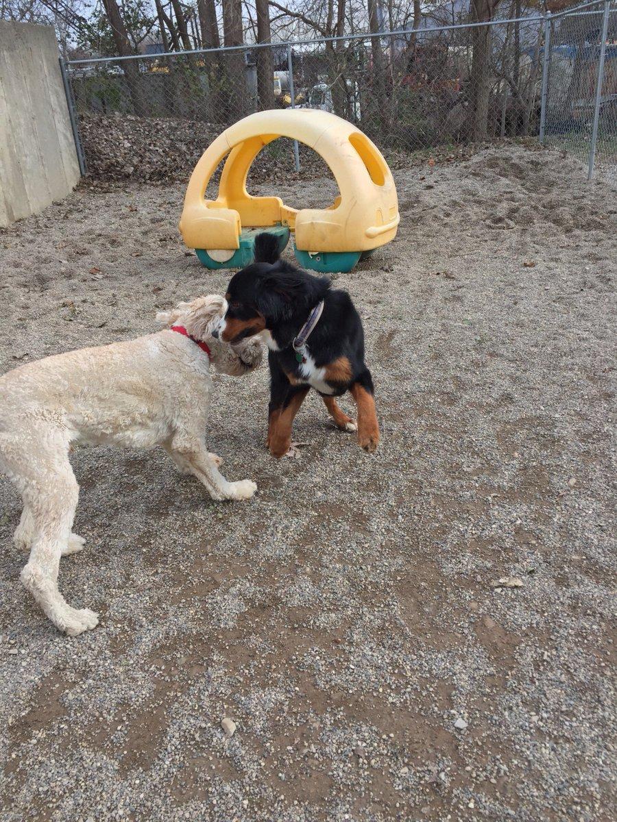 Zooey dodges past Riley H.