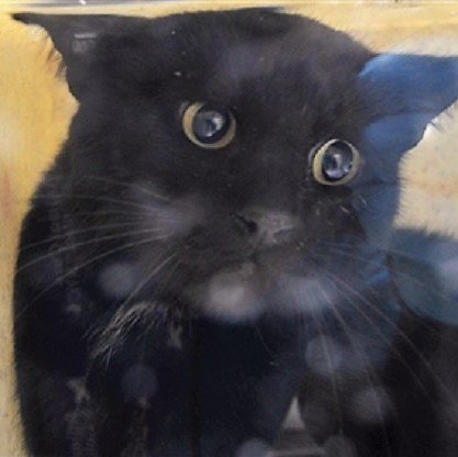 http:// nyccats.urgentpodr.org/isle-12448/  &nbsp;    ISLE Handsome Sweet Soul Has had a Rough Life on the Streets  He needs Patience &amp; TLC On TBD List b/c He&#39;s Terrified  Look at His Face!! Poor Soul TBD 11/18/17!!! Adopt/Foster/Pledge/RT!!! Killing starts at12PM #NYC   http:// information.urgentpodr.org/adoption-info- and-list-of-rescues &nbsp; … <br>http://pic.twitter.com/aO7k8PA19L