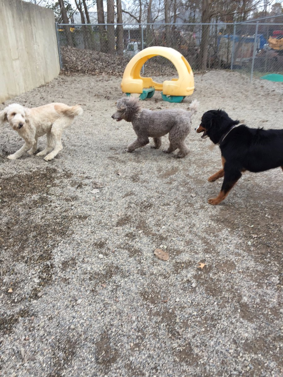 Riley H., Zooey and Teddy play follow the leader