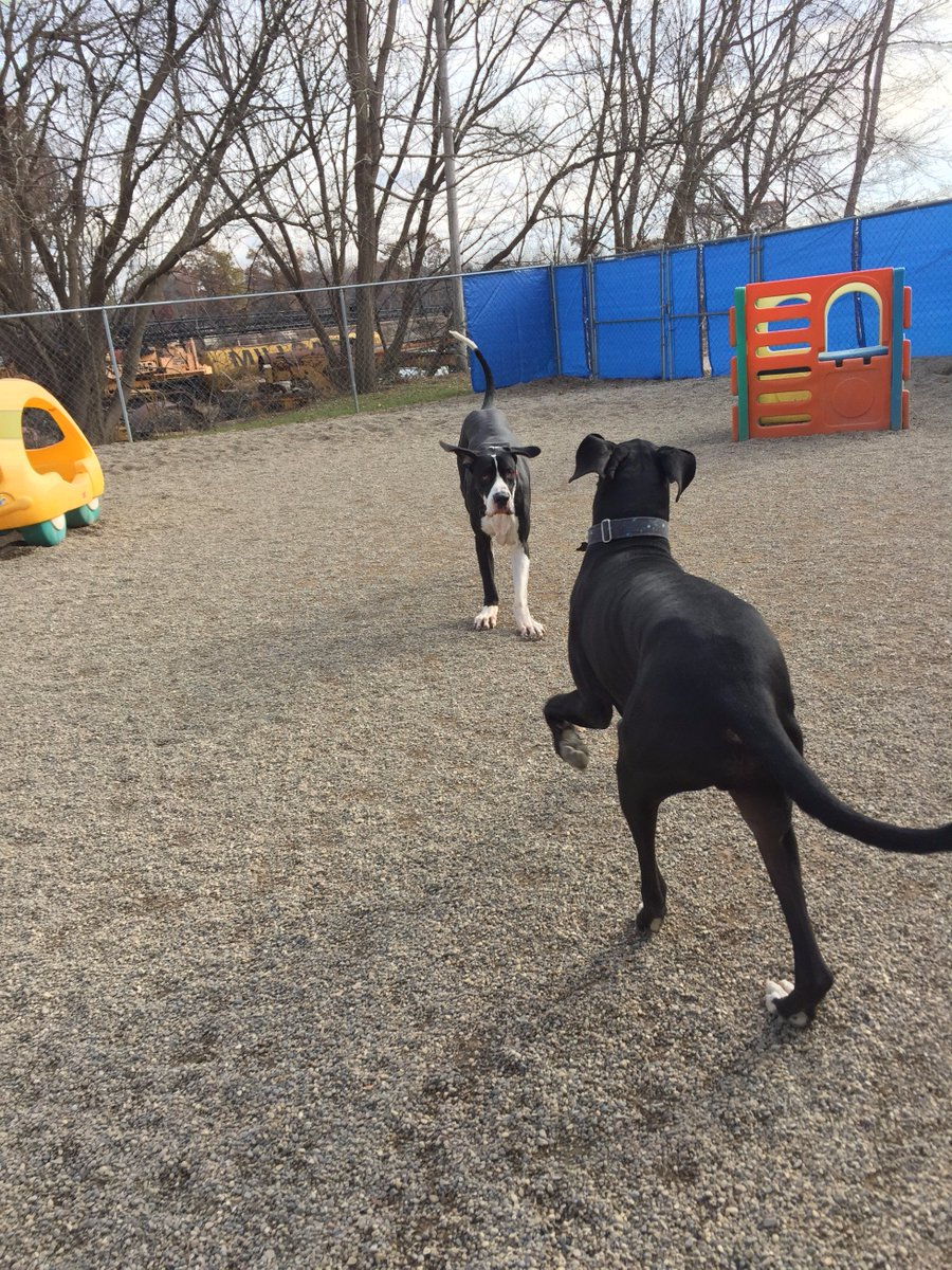 Zeus races in to play with Loki