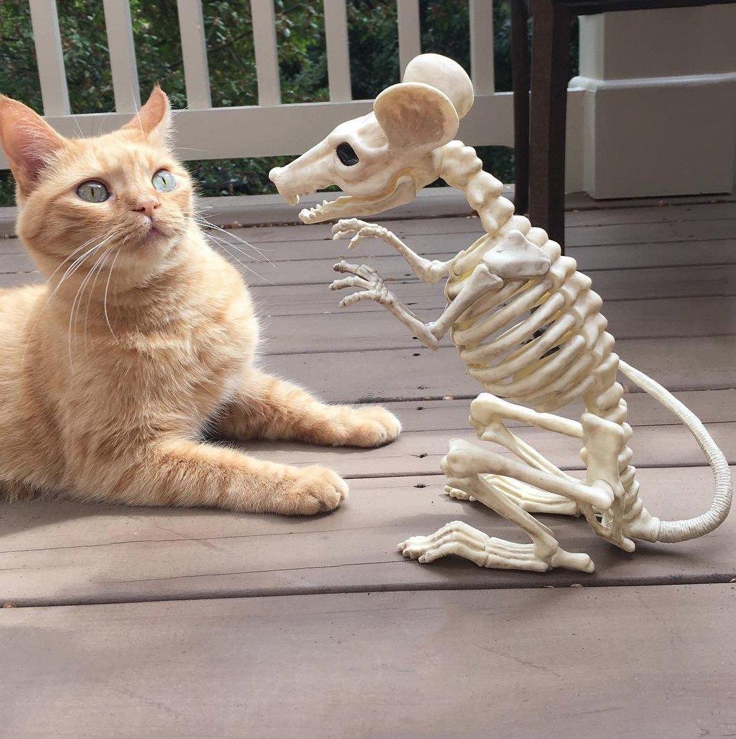 Scaredy Cat https://t.co/1onZiu7vMr