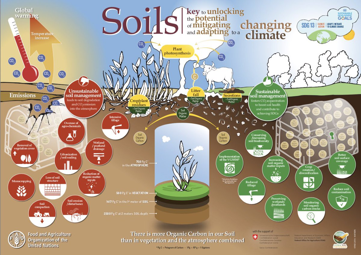 #Soils: key to unlocking the potential of mitigating &amp; adapting to #ClimateChange Infographic via @FAOKnowledge  http://www. fao.org/documents/card /en/c/50c32100-1a82-4375-9342-7102eb526db2/ &nbsp; … <br>http://pic.twitter.com/ZLNXZjmtO5