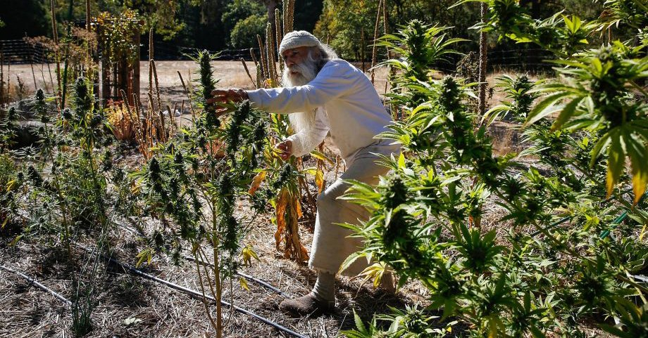 "Big-farm takeover feared under California's new #cannabis rules: ""Frankly, this could be a catastrophe.""  http:// bit.ly/2AXfBbe  &nbsp;  <br>http://pic.twitter.com/LJG6NnlWk2"