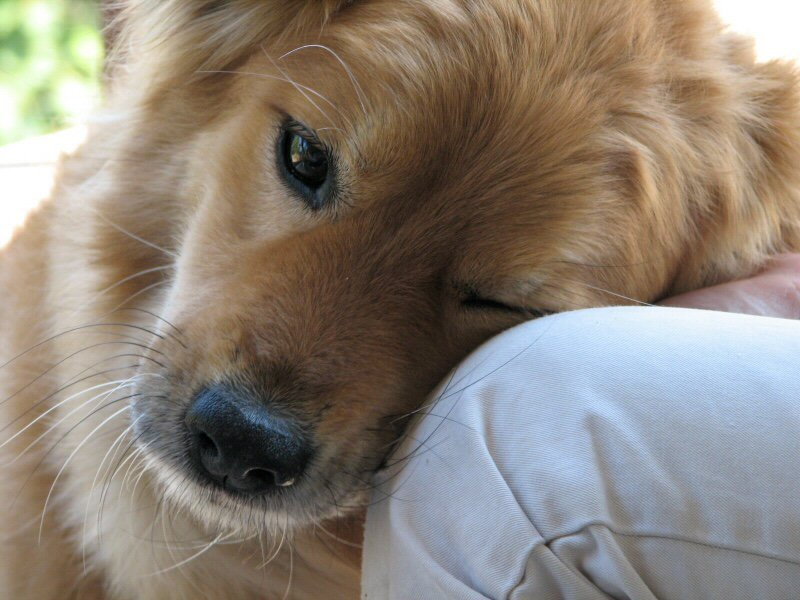 When you need someone to care, a dog is there. #dogsarelove <br>http://pic.twitter.com/ri7IrYGcdz