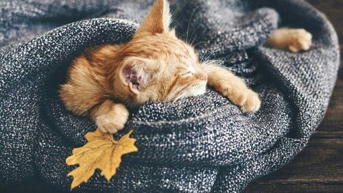 Don&#39;t mind me! Me gonna have a lazy weekend.  #caturday <br>http://pic.twitter.com/ovXbe0rAqv