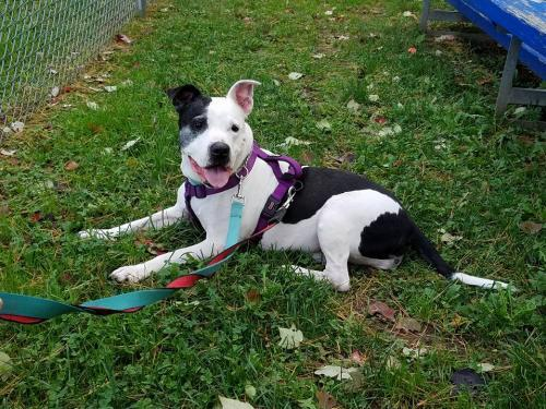 Pick up #PRINCESS before time runs out! #rescuedogs She needs your love! #Rescue   https://www. petfinder.com/petdetail/3834 7422 &nbsp; … <br>http://pic.twitter.com/KKoh2QcLDu