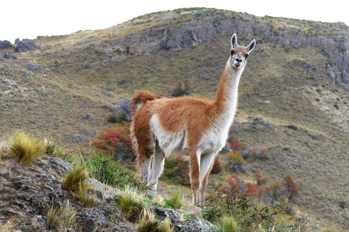 HappySaturday ⚘ @koliguz  @sywnps  @rudirudenski  @russkoesolnce  @FP_shinnosuke  @RaveenPaswanDVT   Landscape of #Altiplano #Bolivia <br>http://pic.twitter.com/w48L6JhRdb