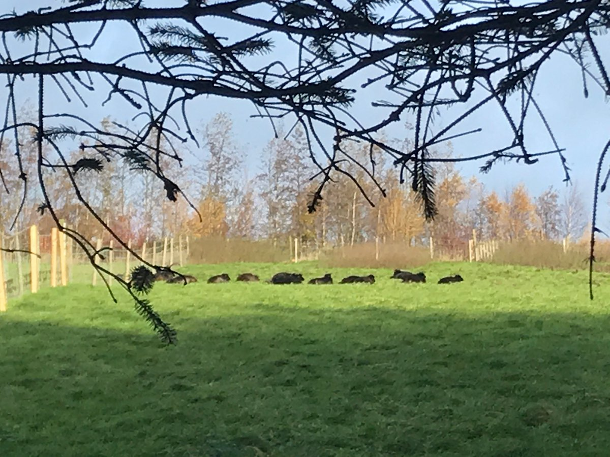 It's the 10am snooze time #RBST #NativeBreeds #Sheep365 <br>http://pic.twitter.com/ThYc1Cuwhu
