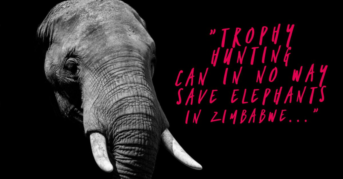 Nothing worse than rich #hunters exploiting #developing countries and killing their #wildlife #Zimbabwe is a #corrupt country thats sells its wildlife off for a price against the peoples wishes.<br>http://pic.twitter.com/Xh1fLQBiKj