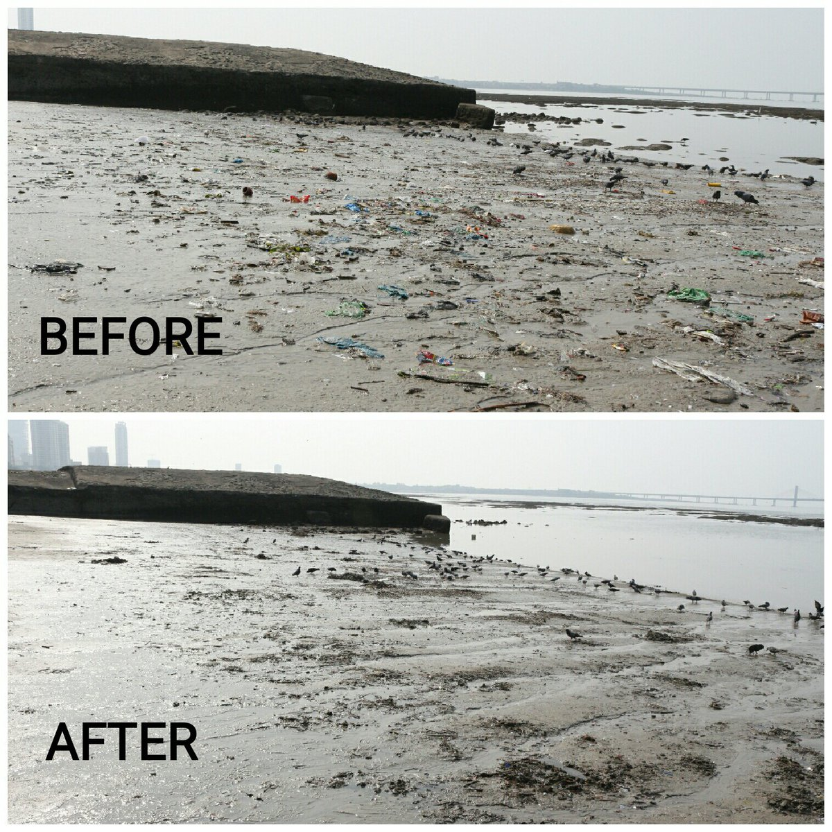 Week 10: It sure was special. The sense of accomplishment after 10 whole weeks is amazing! With @VSITCollege  and NSS unit of Ruia college @TheRuiaite #Thanks a ton! And, we shall not stop! #SwachhBharat #beachplease #latepost #PMModi<br>http://pic.twitter.com/WrzBCuOiMA