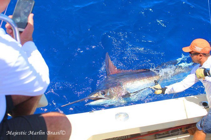 Canavieiras, Brazil - Camargue went 1-1 on Blue Marlin and 1-2 on White Marlin.