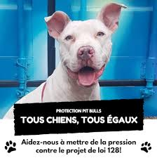 B4 BSL happened in #Mtl, I didn&#39;t know the name of our mayor, didn&#39;t know how the Municipal gov. worked, NOW, I know. B4 #Law128 was discussed, barely knew the names of the Provincial players, NOW I know. I am not the only one.  We&#39;re coming for you too. #EndBSL #polqc #polmtl<br>http://pic.twitter.com/pRUHUGyBws