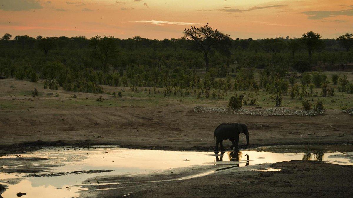 #Trump contraint de faire marche arrière sur l'importation de trophées d'éléphants. https://t.co/S8MmjY3LKy