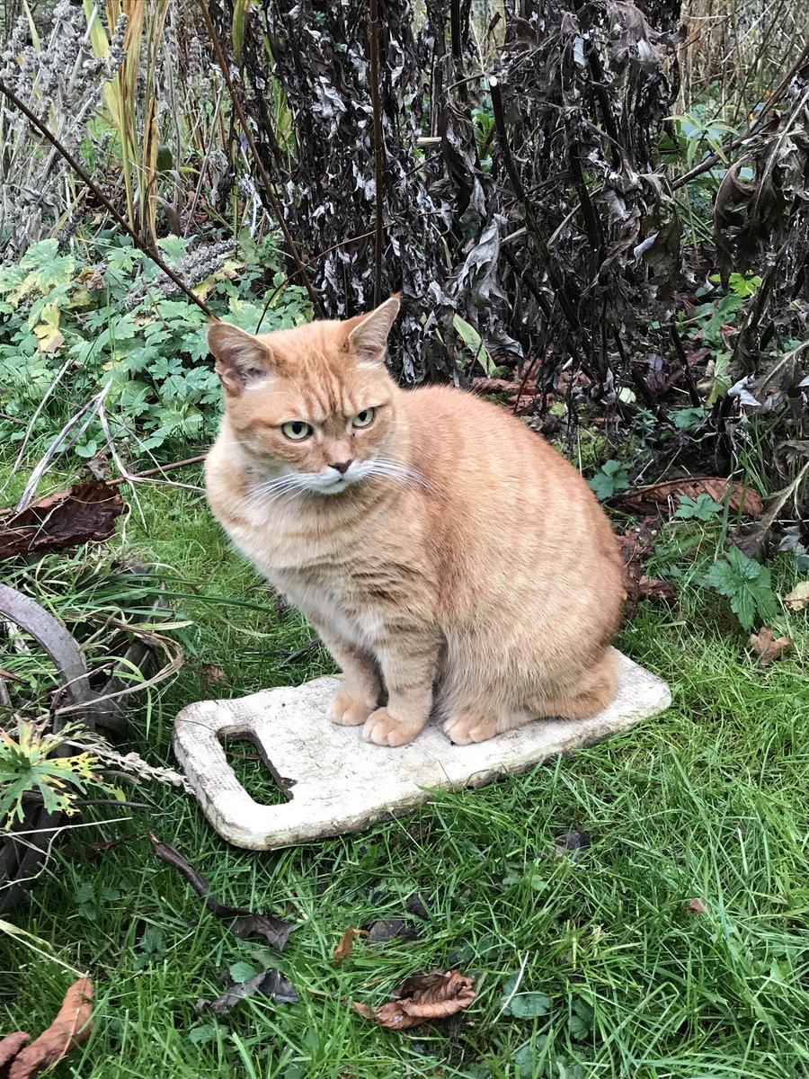 His gingerness is fiercely guarding the kneeling pad #gardencat #gardening #gingercat<br>http://pic.twitter.com/22NtT9nLQg
