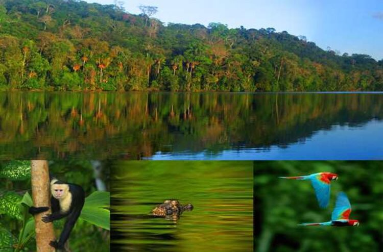 Come to experience this breathtaking scenery,  simply amazing #BoliviaCorazonDelSur ! #Madidi National Park, jungle paradise situated in the in the upper Amazon river basin of #Bolivia <br>http://pic.twitter.com/epEzwu2dp2