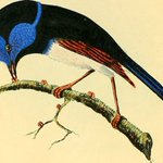 What an *astonishing* resource: two million wondrous nature illustrations made freely available by the Biodiversity Heritage Library. Yes. Images here: https://t.co/cIvz76yhv9 Background to the project here: https://t.co/2GLen93ocn