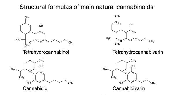 folks interested in #cannabinoids let @GooeyRabinski lay down the science #phytocannabinoids #endocannabinoids