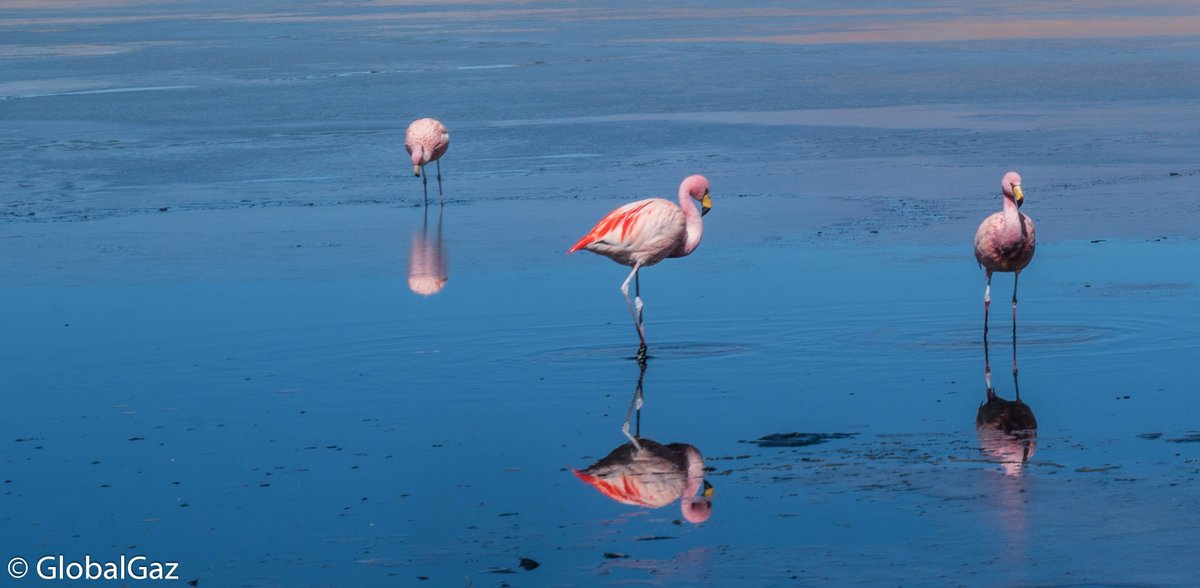 Check out the amazing and beautiful #Salar de #Uyuni in #Bolivia #travel #guide  https:// buff.ly/2yKZgoN  &nbsp;  <br>http://pic.twitter.com/f34hCTGwPn