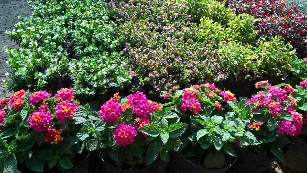 Plantas Exterior Sol. Flores Resistentes Al Sol With Plantas ...