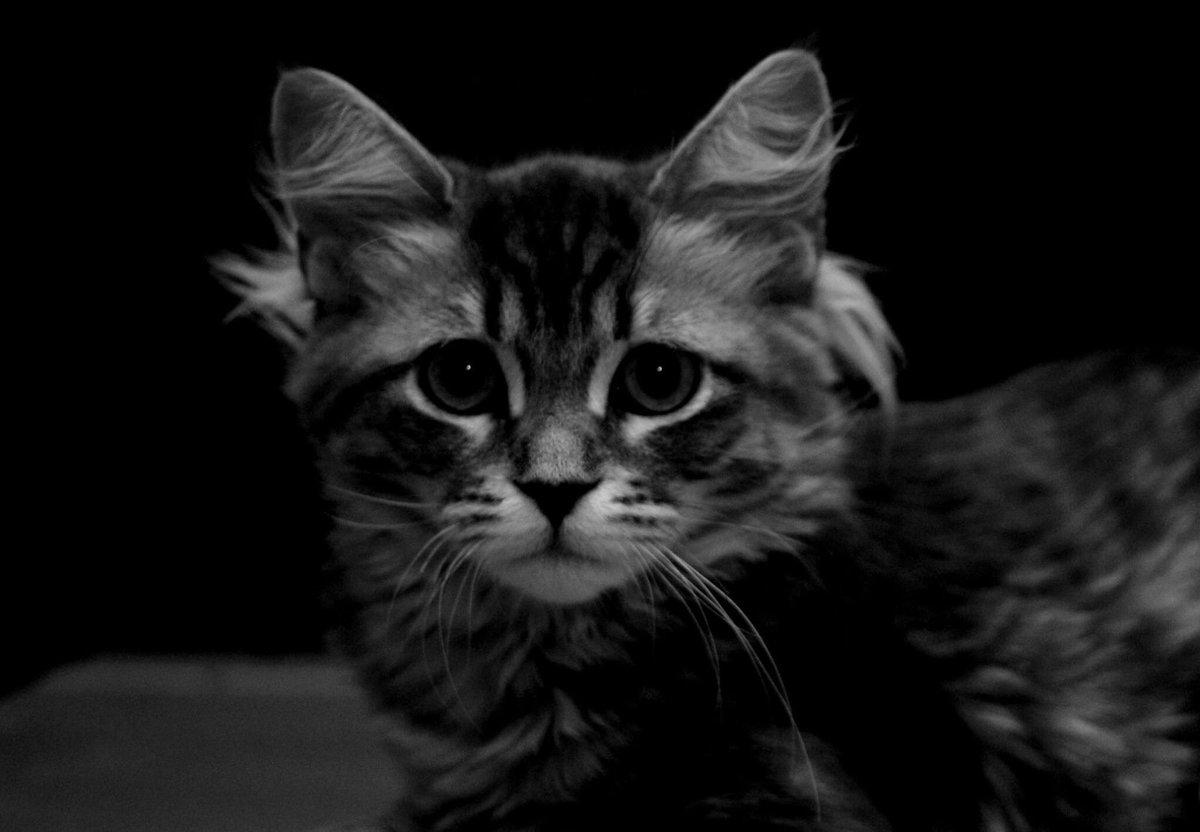 Black Metal Cats (@evilbmcats) | Twitter