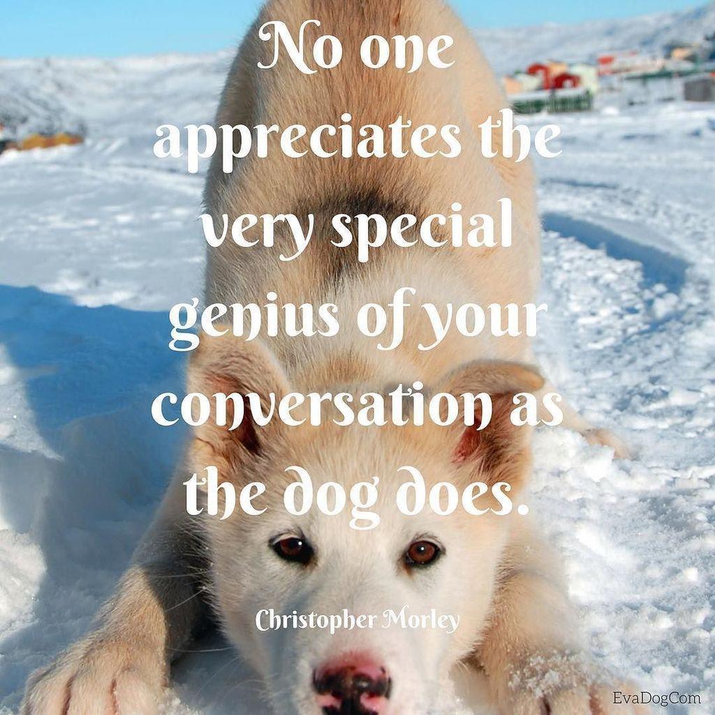 True #dogquotes #dog #quote #doglover #ilovedog #evadogcom #doglovers<br>http://pic.twitter.com/02OROFcpr5
