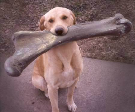 No you can&#39;t have it! I found it, now go find your own! #DogsofTwitter #DogMom #DogDad #Dogs #Dog #DogLover <br>http://pic.twitter.com/pUayOfk0pe
