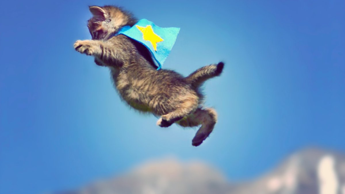 Can You Fly Cats On A Plane