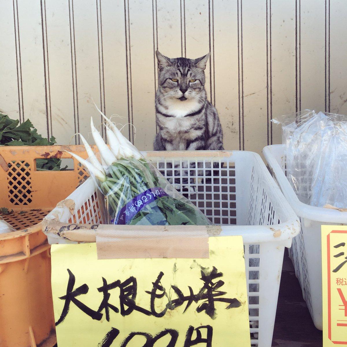 無人販売ならぬ有猫販売?!自転車をこいでたら猫の八百屋を発見しちゃった!