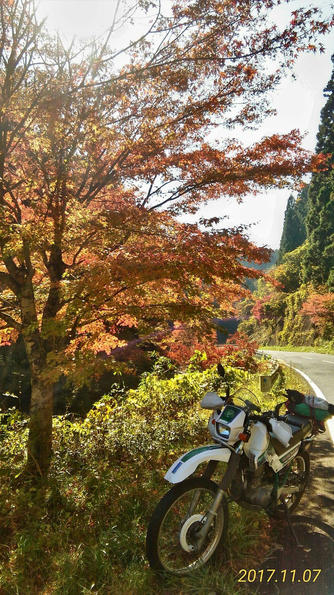もみじラインの紅葉(2017/11/07)