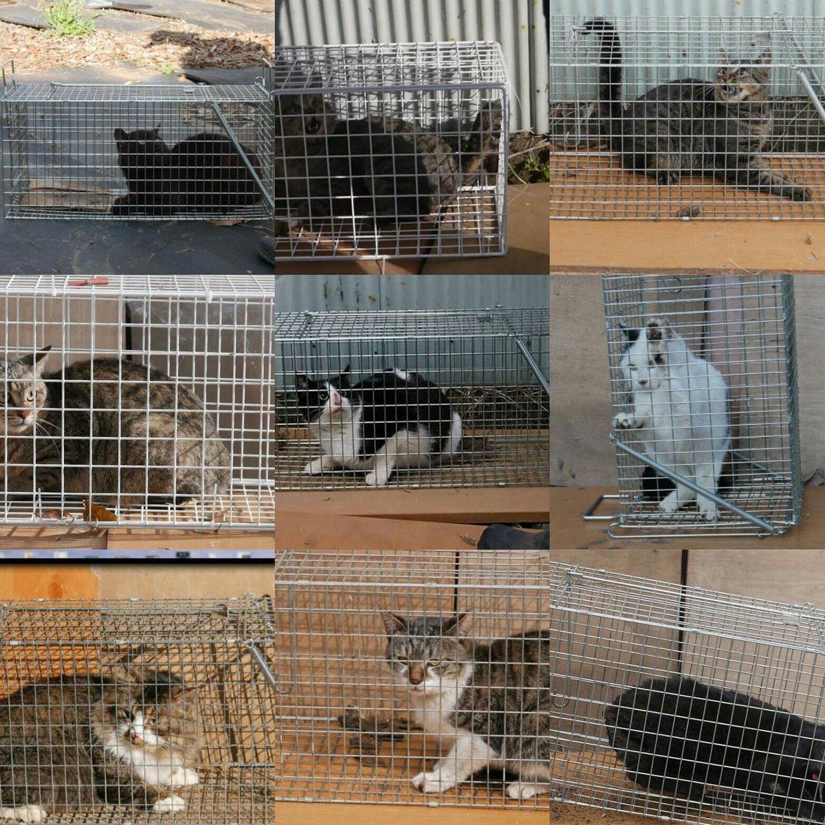 """あやこ 兄妹ねこ捜索中 On Twitter: """"#大矢誠被告人 たくさんの猫たちに残虐な拷問を繰り返し、あざ嗤い"""