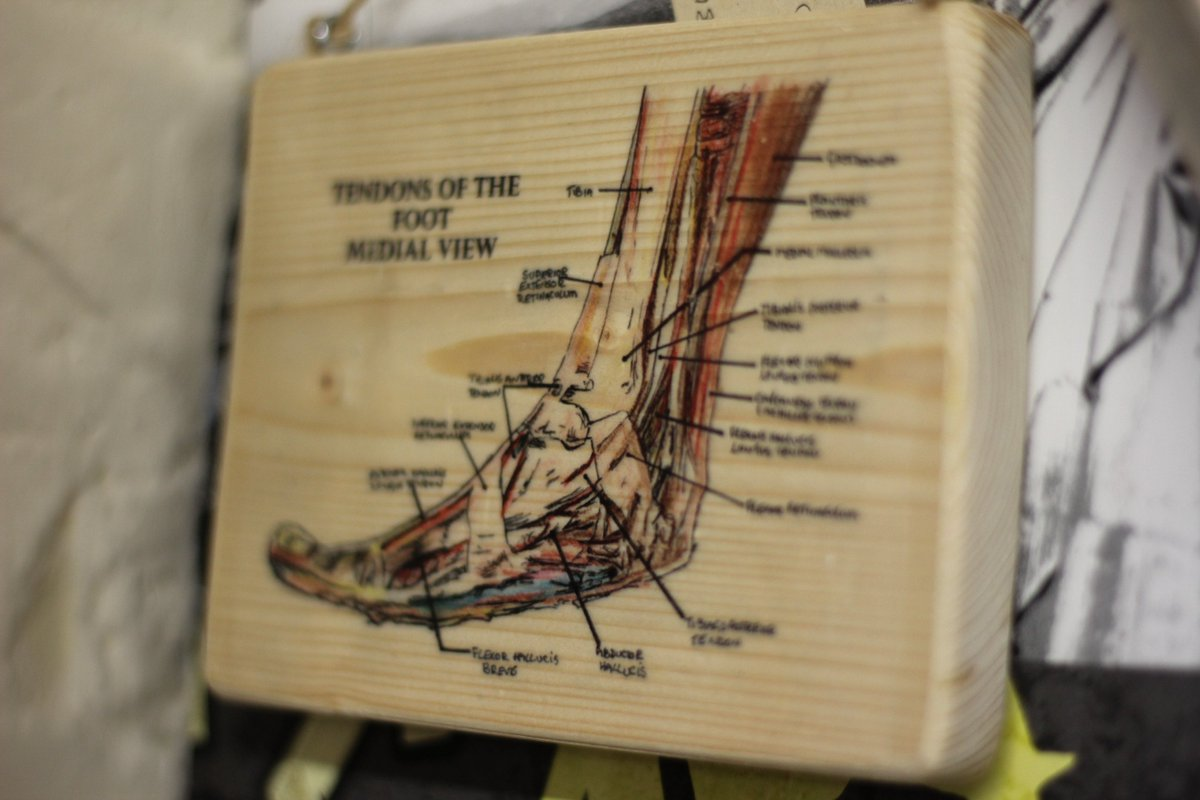 Anatomy wood block prints, great gift idea for anyone medical. Get in touch at  http:// Facebook.com/hanmadeinsalis bury &nbsp; …  to buy or request one  #bones #medical #handmade #woodblock #crafts<br>http://pic.twitter.com/k9upZEL0Gs