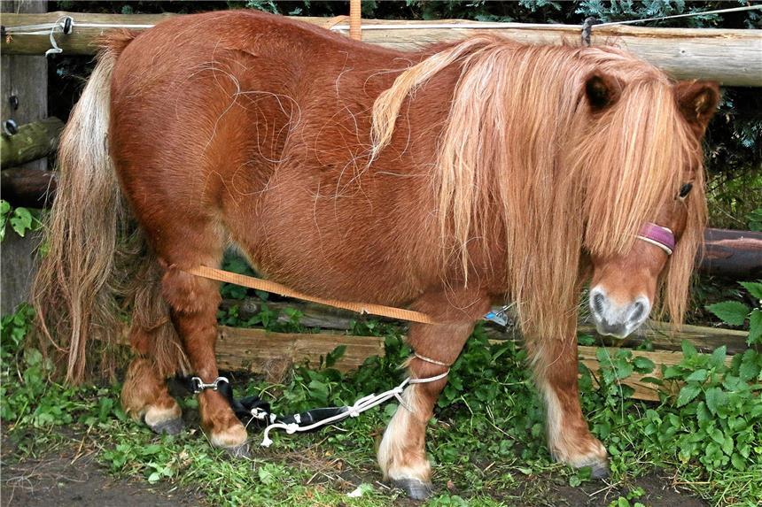 Rn Dortmund On Twitter Schon Wieder Ist Ein Pony In Dortmund
