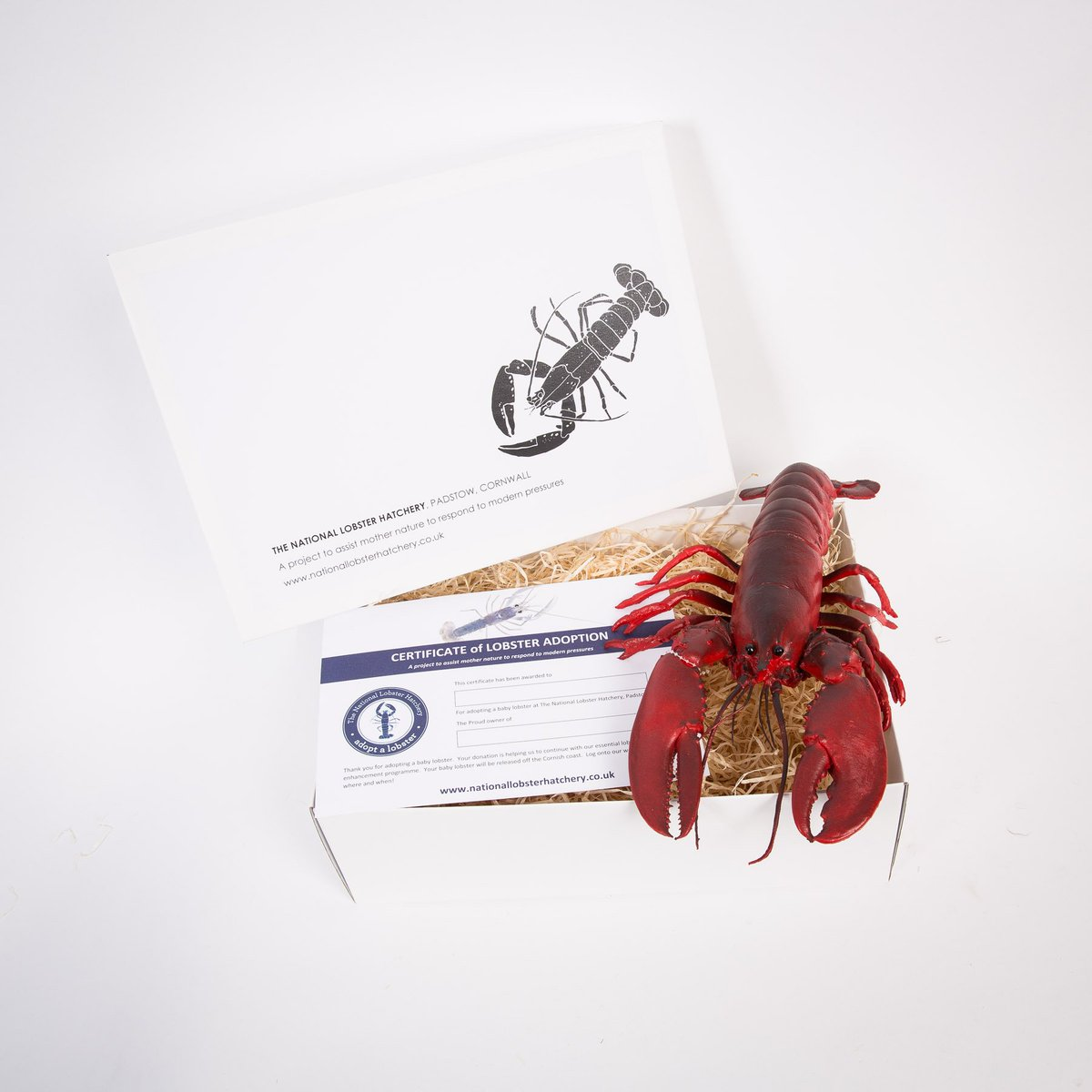 #Adopt a Lobster gift packs for Christmas #charitygiving supporting marine conservation @PadstowLobster start at £15 http://bit.ly/lobstershop ...